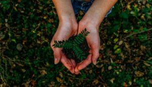 Principales movimientos ecologistas en el mundo y el medioambiente