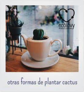 Decoración de interiores con plantas y cactus