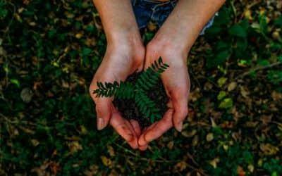 Movimientos ecologistas en el mundo: 10 ejemplos