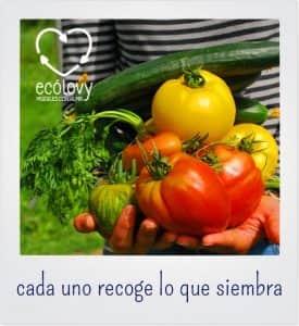 plantar verduras y vegetales en un huerto urbano ecológico